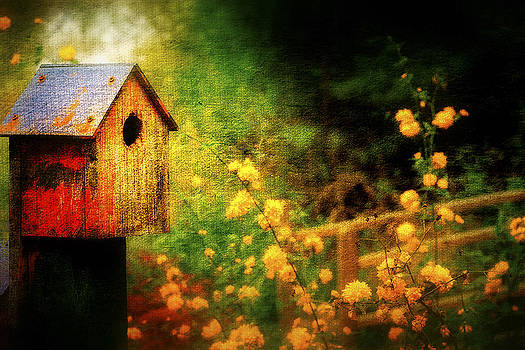 Birds Home by Vjekoslav Antic