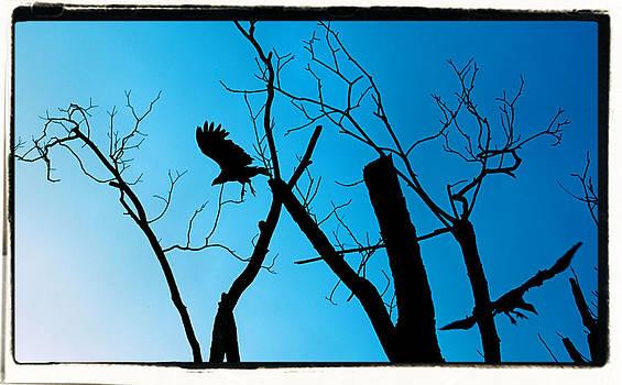 Flying by Paulette Maffucci