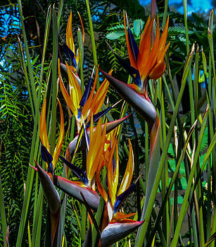 Birds Of Paradise by Wanda J King