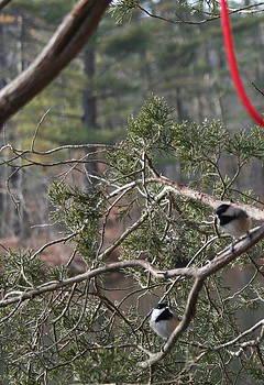 Birds on a Branch ver B by Stephen Melcher