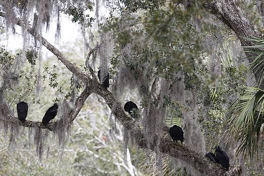 Birds on a Limb by Kimberly Oegerle