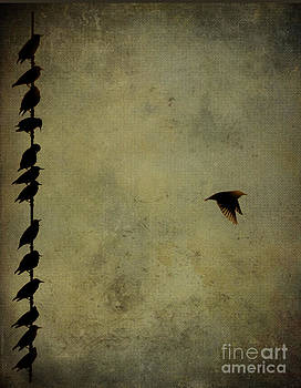 Birds on a wire 2 by Jim Wright