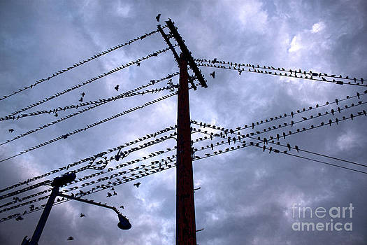 Gregory Dyer - Birds on a wire in blue