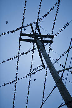 Birds on a Wire by Joel Moranton