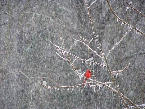 Birds On Ice by Diane Frick