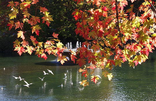Birds over water by Jocelyne Choquette