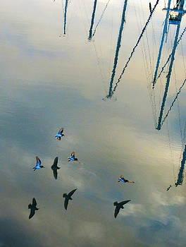 Birds Shadows And Mast by John King