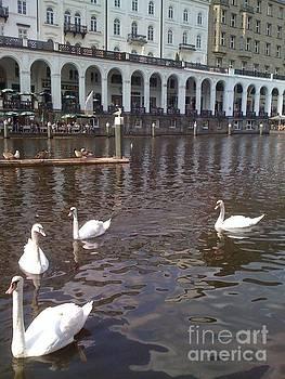 Hamburg Germany Swans by Sherri Durrell