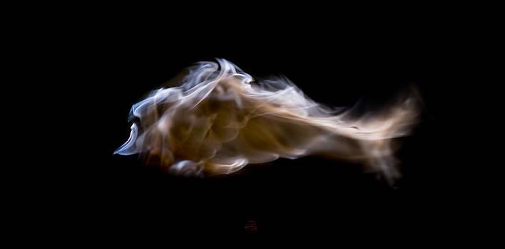Steven Poulton - SwimIng Light