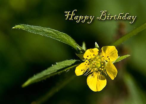 Jeanette K - Birthday Buttercup