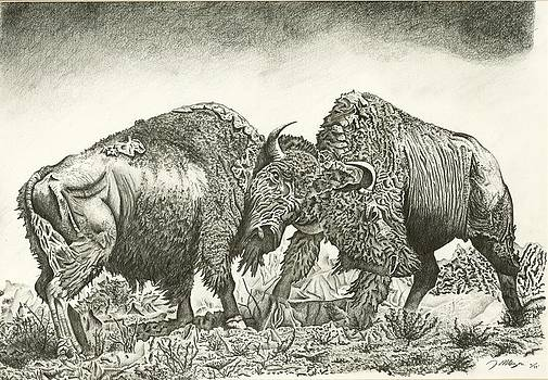 Bison Fight by Jason Morgan