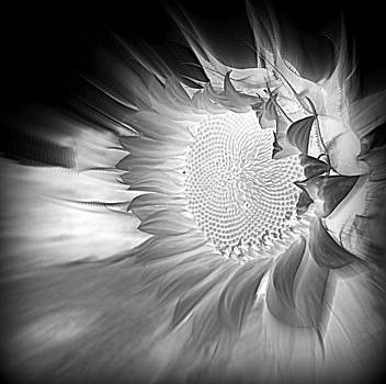 Black and White Bliss by Sian Lindemann