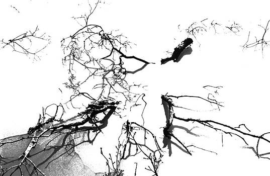 Black and white branches in water by Patrick Kessler