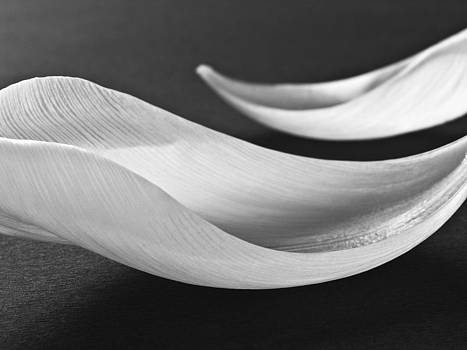 Abstract Black and White Flowers Art Work Photography by Artecco Fine Art Photography