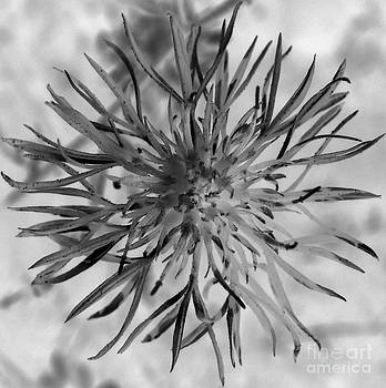 Black and White Flower by Mike Cartwright