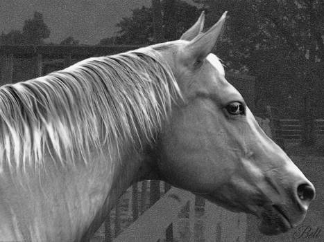 Christine Belt - Black and White Marriah