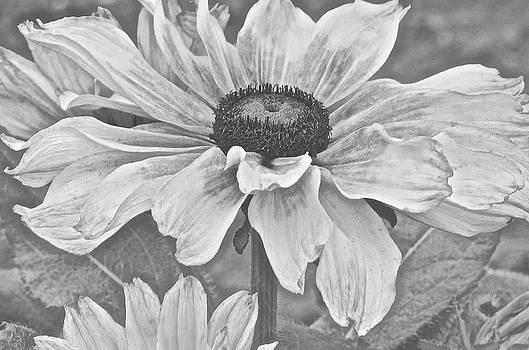 Christine Belt - Black and White Oh Summertime