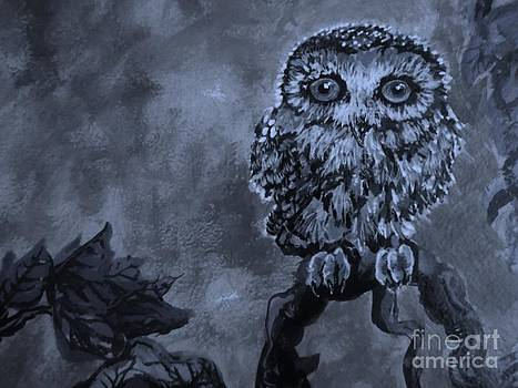 Black and White Owl in the Night by Emily Michaud