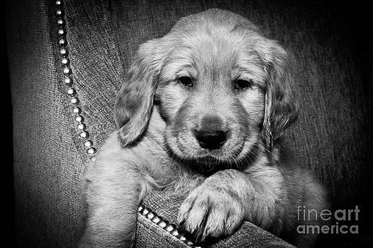 Black and White Puppy by Jason Feldman