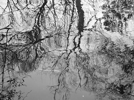 Black and White Reflection on the Whight Oak River by Matthew Kay