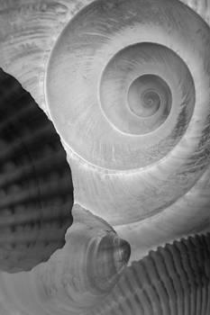 Carolyn Stagger Cokley - Shells bw