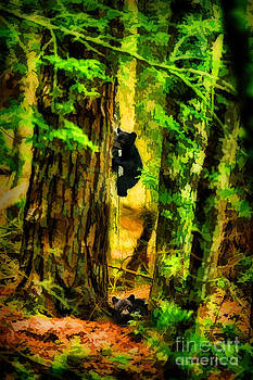 Dan Friend - Black bear cubs playing in woods artistic