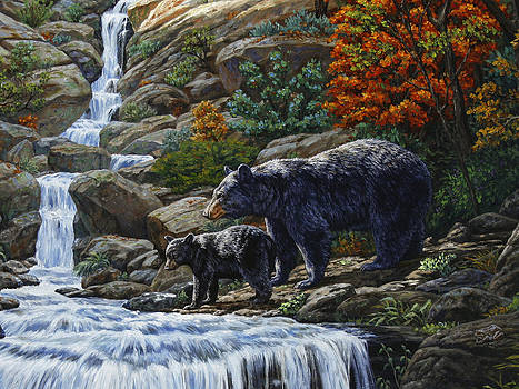 Crista Forest - Black Bear Falls - Closeup