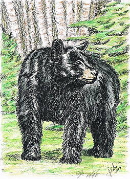 Black Bear by Joann Renner