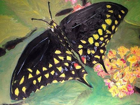 Black Beauty by Cindy Lawson-Kester