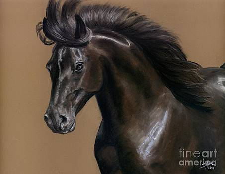 Black Beauty by Sheri Gordon
