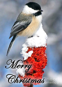 Black-Capped Chickadee on Sumac Greeting Card by Deanna Wright