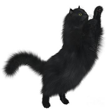 Corey Ford - Black Cat