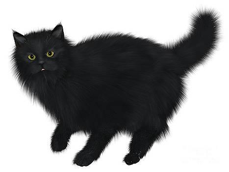 Corey Ford - Black Cat Walking