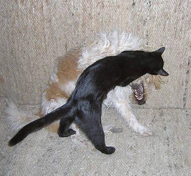 Black cats' Goliath feeling by Zsuzsa Balla