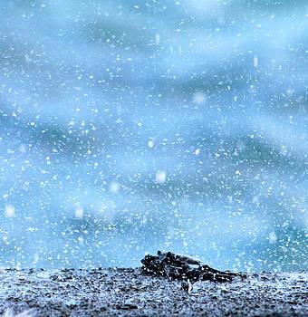 Black crab in the blue ocean spray by Lehua Pekelo-Stearns