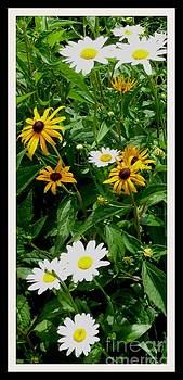 Gail Matthews - Black Eyed Susans and Daisy