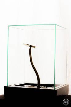 Black Gold Lily by Yevgeni Kacnelson