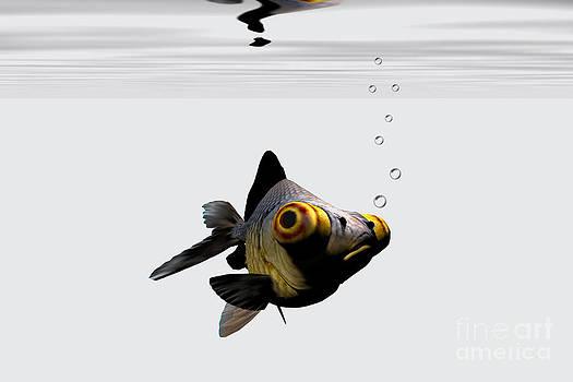 Corey Ford - Black Goldfish