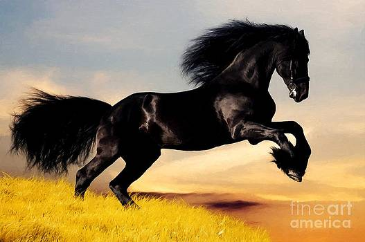 Black Horse by Larry Stolle
