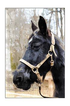 Black Horse by Susan Leggett