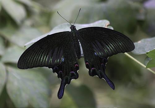 Qing  - Black is Beautiful