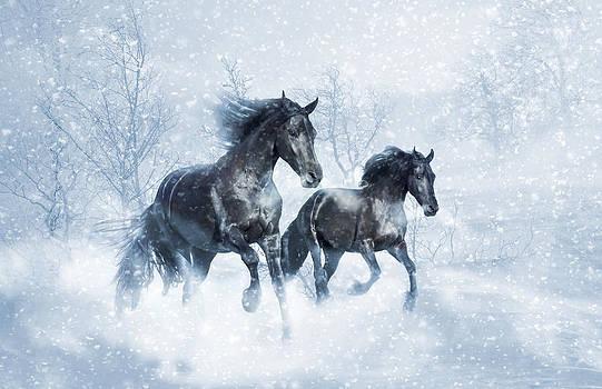 Black Pearls White Winter by Jamie Mammano