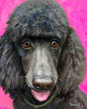 Black Poodle on Hot Pink by Dottie Dracos