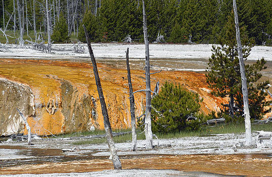 Black Sand Basin Therma Runoff Yellowstone by Bruce Gourley