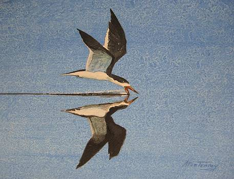 Black Skimmer by Stan Tenney