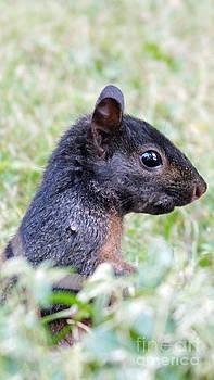 Black squirrel portrait by Tabatha Knox
