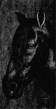Angela A Stanton - Black Stallion