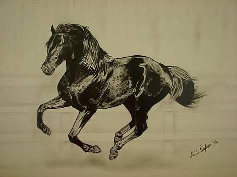 Black stallion by Melita Safran