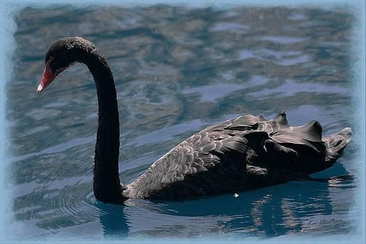 Kae Cheatham - Black Swan