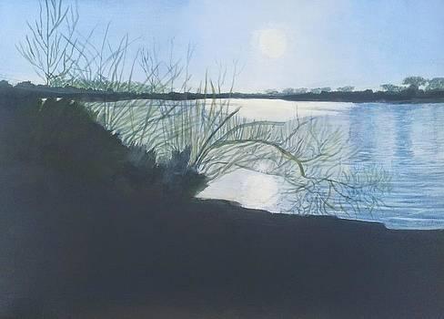 Black Swan Lake by Joanne Perkins